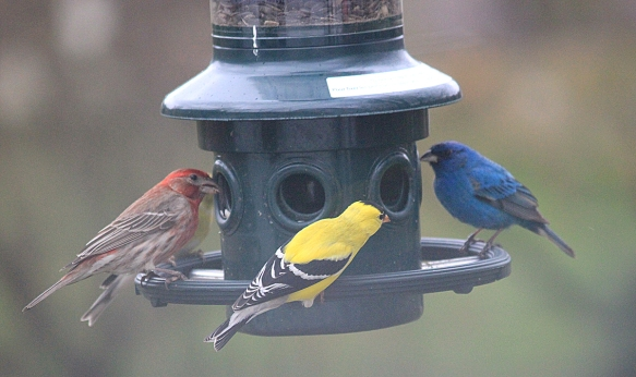https://birdsofnewengland.files.wordpress.com/2013/11/ben-thomas.jpg
