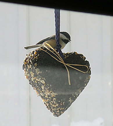 A chickadee visits a heart-shaped feeder in this photo taken by Karen Wells of Peterborough, N.H.