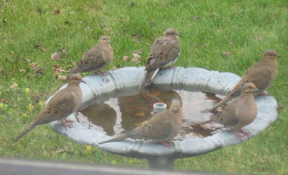 Photo by Dennis Austin Dennis Austin of Keene, N.H., got this photo of a group of doves at a bird bath during the fall of 2015.
