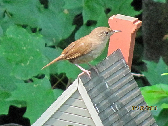 Jim Hood of Norwalk, Conn., got tihs photo of a House Wren on a birdhouse in summer 2015.