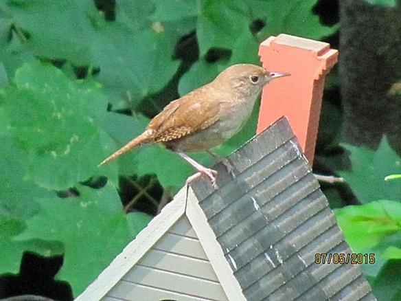 Jim Hood of Norwalk, Conn., got tihs photo of a House Wren on a birdhouse in summer 2015.