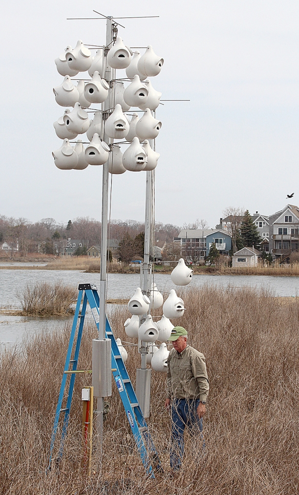 Contributed photo Milan Bull, Senior Director of Science and Conservation at Connecticut Audubon, sets up the Purple Martin gourds at the Coastal Center at Milford Point on Monday, April 14, 2014.