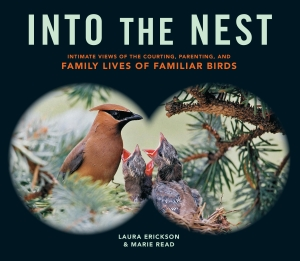 Into the Nest cover