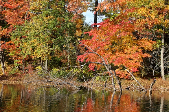 Photo by Chris Bosak Fall colors at Merganser Lake in Connecticut, fall 2015.