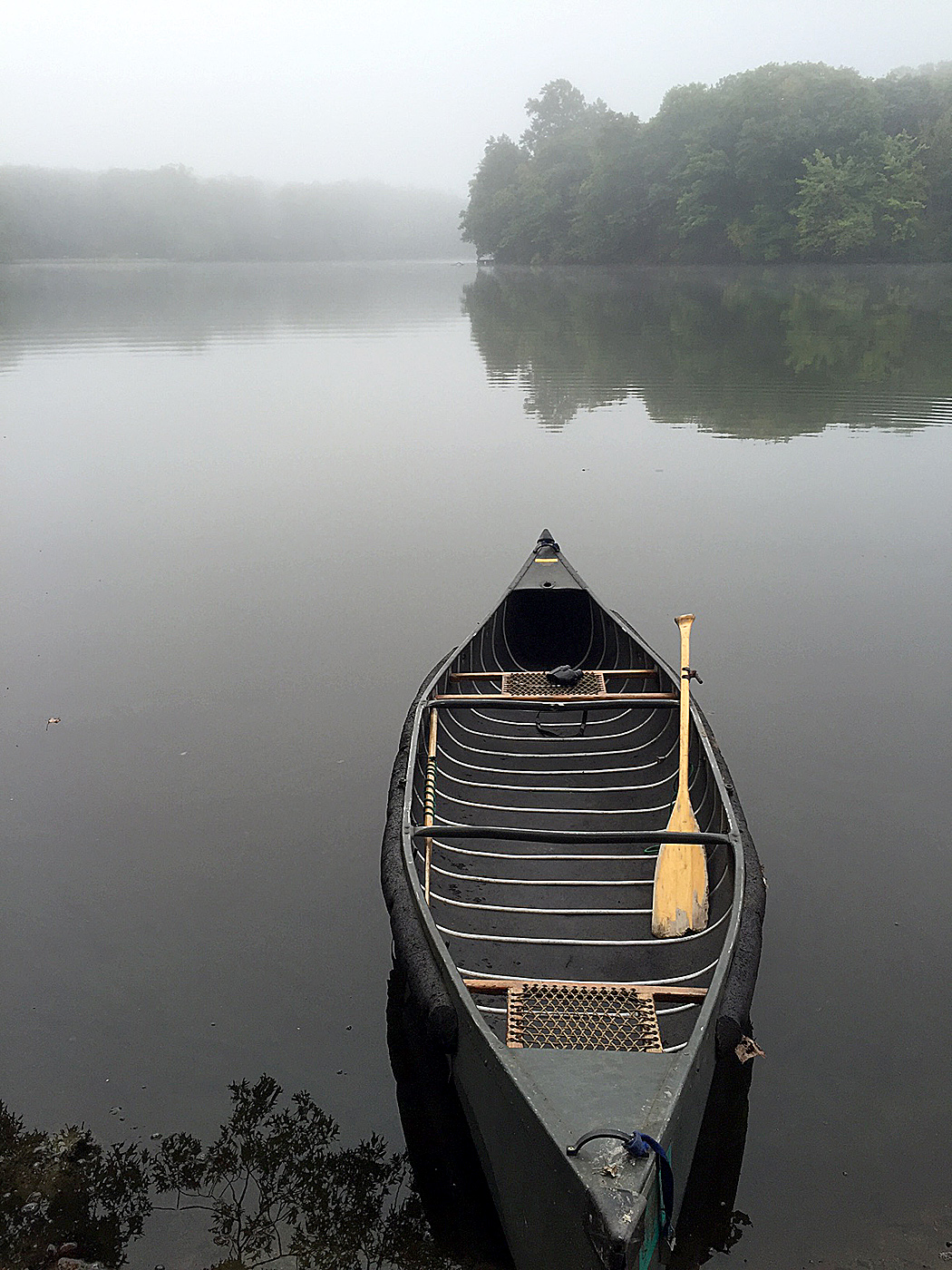 Classic For the Birds: Paddling freshwater | Birds of New England com