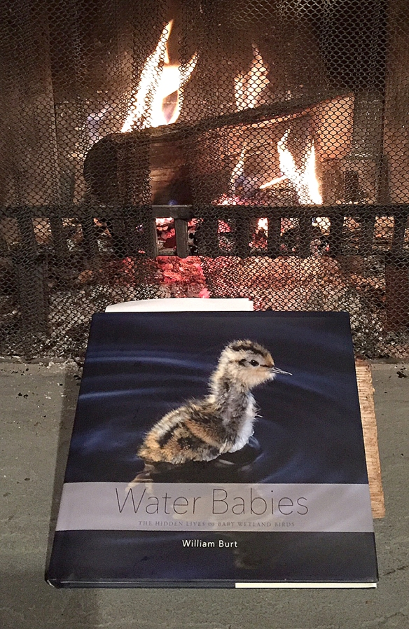 Photo by Chris BosakCover of Water Babies by William Burt.
