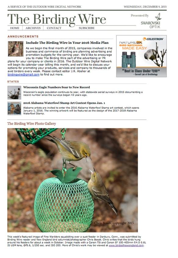https://birdsofnewengland.files.wordpress.com/2015/12/birding-wire-mash.jpg?w=584&h=847