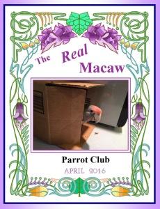 parrot newsletter 2
