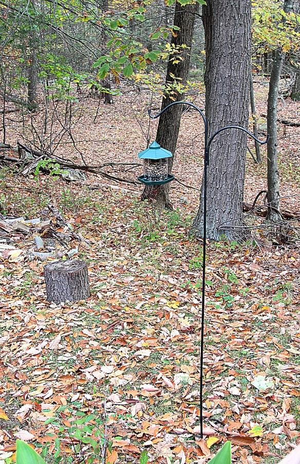 "The set up for the Audubon Park ""My Bird Week"" media challenge. Backyard in Danbury, Conn., Nov. 2016"