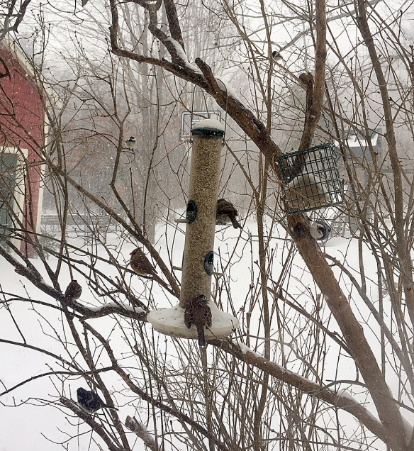 Alicia Primer of Weston, Mass., got a nice variety of birds in this photo. How many can you pick out?