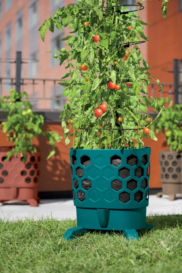 Photo by Gardener's Supply Company Growing tomatoes in container gardens enables gardeners to jump start the growing season.