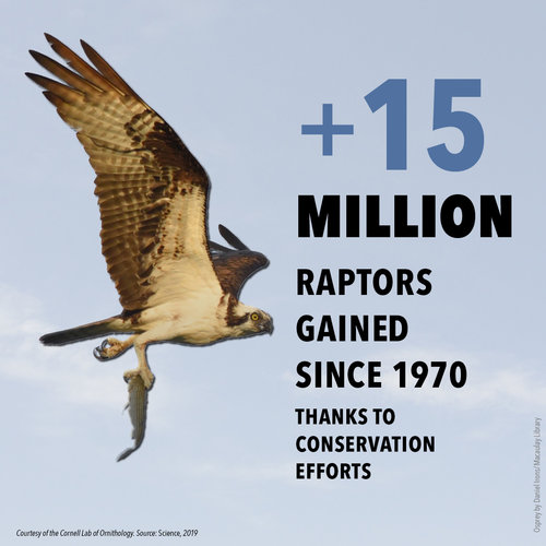 BirdDeclines-gains-raptors.jpg