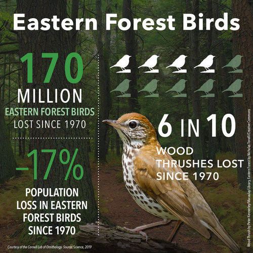 BirdDeclines-eastern-forest.jpg