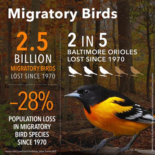 BirdDeclines-migratory-28.jpg