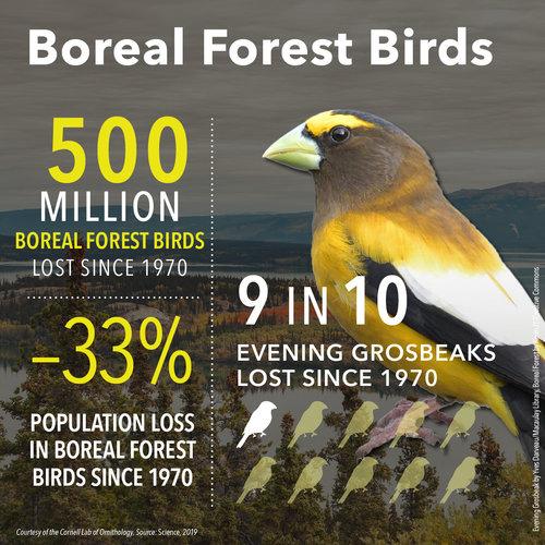 BirdDeclines-boreal.jpg