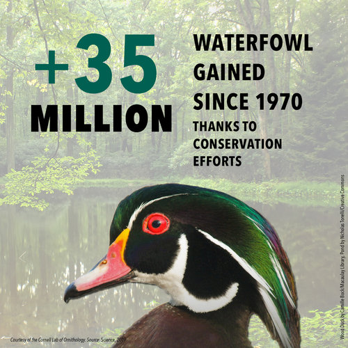 BirdDeclines-gains-waterfowl.jpg