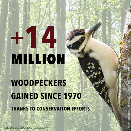 BirdDeclines-gains-woodpeckers.jpg