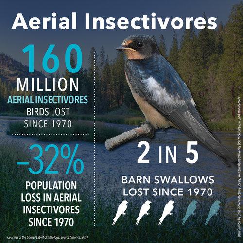 BirdDeclines-aerial-insectivores.jpg