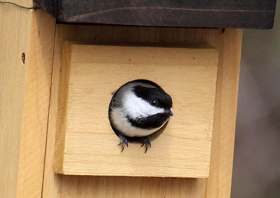 Bird Nests Birds Of New England Com
